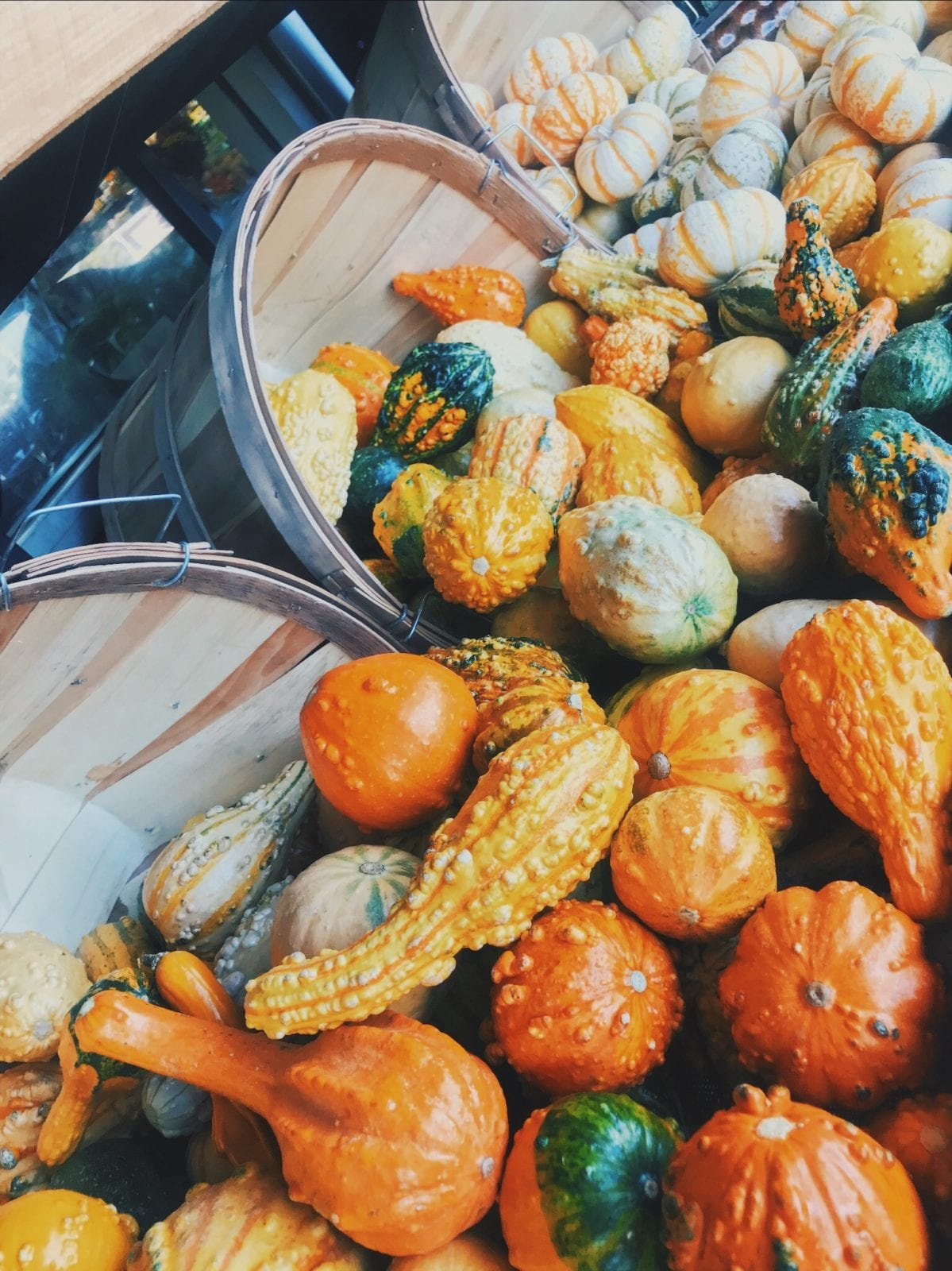 Pumpkins are pouring out of barrels, and effortlessly creating beautiful fall decor.
